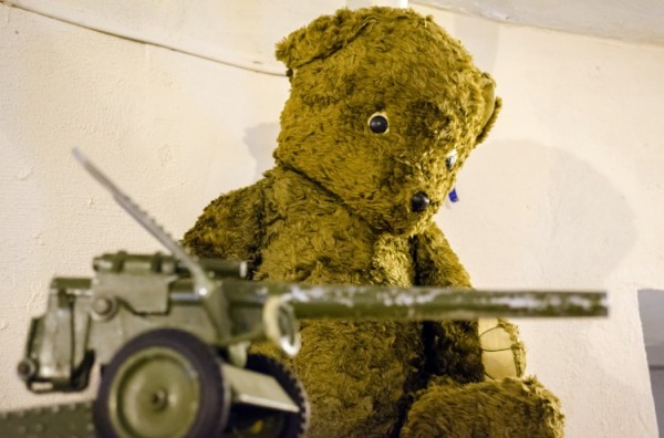 Медведь Аристарх. Фото Дмитрия Миртича